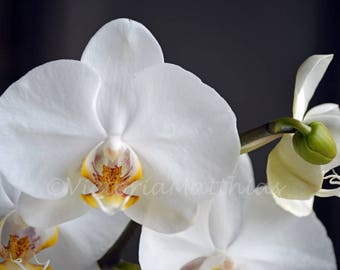 White orchid fine art photography photo print matted wall decor