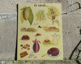 Vintage French School Poster - Deyrolle Poster - Le Cacao - Musee Scolaire French Vintage Educational Poster on Board - Chocolate Poster