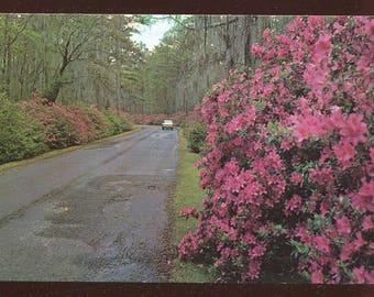 Entrance Cypress Gardens Charleston South Carolina Vintage Postcard 547