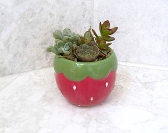 Strawberry Pot Succulent Planter - Live Succulent