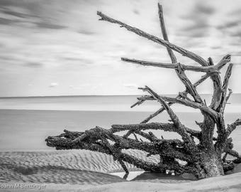 Hunting Island #1107 - Bone Yard-Beaufort South Carolina, Fine Art Photography, Black and White, Beach, Weathered Wood, Home or Office Decor