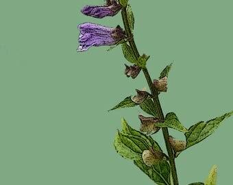 Flower, Art, Vintage, Flower Photography, Digital Download