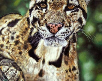 Clouded Leopard, an original artwork by Amanda Smith-Mitchell