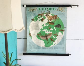 Pull down map German pull down chart educational map roll down chart pull up biology animal chart canvas back chart migration of of animals