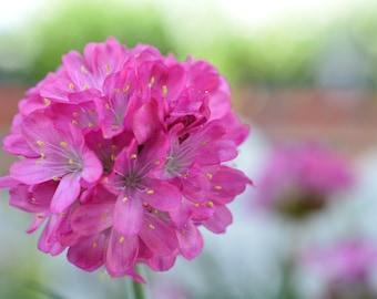 Round Pink Flower Photograph #142