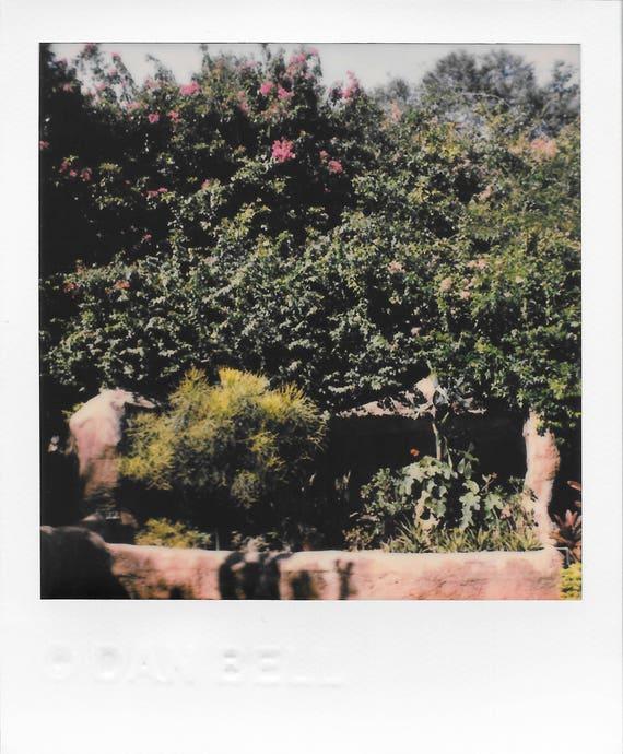 Tropical Fauna / Original Polaroid by Dan Bell