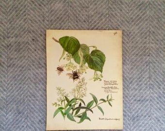 Genuine vintage framed botanical drawing, flower illustrations, print, floral, glass frame, double sided bumble bees