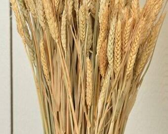 Rye Stalks | Rye Bundle | Rye Shocks | Dried Decor | Natural Decorations