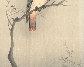 "Japanese Art Print ""Japanese Waxwing on a Branch"" by Ohara Koson, woodblock print reproduction, fine art, asian art, cultural art, seasonal"