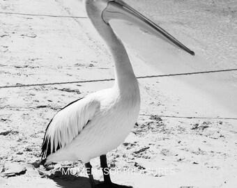 Pelican Instant Digital Download