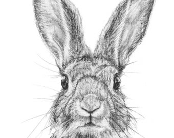 ORIGINAL ARTWORK A4 PRINT Charcoal Drawing of an English Rabbit