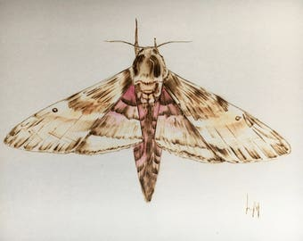 Original Watercolor Moth Art, Sphinx Moth, Watercolor and Pyrography, Burned on Paper, Butterfly Art, Pink Moth Painting, Wood Burner Moth