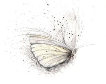Limited Edition Giclee Butterfly Art Print