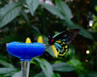 Feeding Butterfly Digital Print