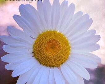 Daytime dandelion 11x14