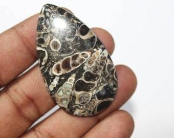 Natural Turritella Agate cabochons Turritella Agate Gemstone Top Quality Handmade Turritella Agate Loose Gemstone 50 Ct {49 X 28}mm #530