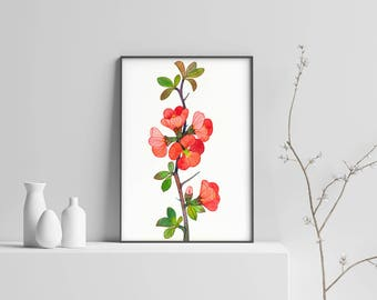 Quince, Floral Art Print, Red Flower Print, Botanical Art Print, Watercolor Flower, Floral Wall Art, Maule's Quince Print, Floral Home Decor