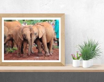 Baby Elephant Friends Fine Art Photography Print