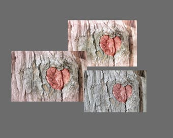 Three Digital Photos Romantic Pink Heart in Rustic Tree Bark Background Stock Image Download