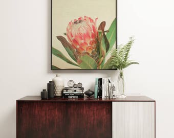 Botanical Print, Flower Art, Nature Photo, Protea, Pink and Green, Spring Decor, Still Life Photo, Garden Art - Pink Ice