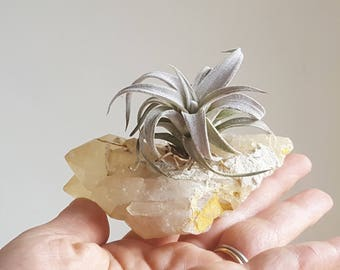 Unique Father's Day Gift, Air Plant Crystal Garden, Air Planter, Real Raw Quartz Cluster, Unique Airplant Display, Gift For Dad