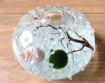 Small Glass Urchin Marimo Moss Ball Terrarium: Several Colors Available