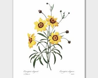 Daisy Art Print (Yellow Room Decor, Vintage Country Art, Botanical Print) Redoute Artwork