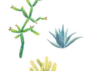 Cacti 5x7 Art Print - Cactus Plants Giclée Print