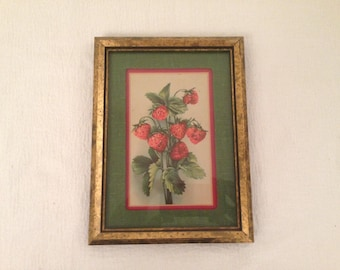 Small Vintage Strawberry Lithograph Matted & Framed