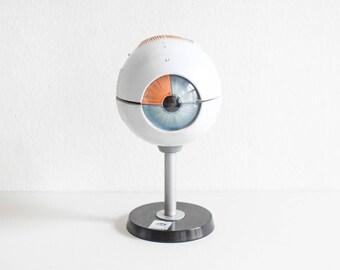 Vintage anatomical eye, eye model, human eye, vintage teaching material Ref: 211