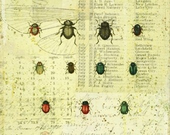 Entomology Mixed Media art print, collage art, vintage bug art, ephemera, beetles, beetle art