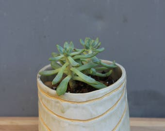 White Ceramic Planter. Hand Carved Planter. Succulent Planter.