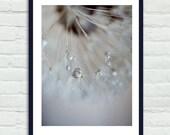 Large grey dandelion photograph, tan brown neutral wall art vertical photo print, powder room art, bathroom wall decor, rain drops picture