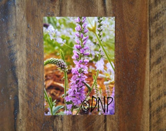 5 by 7 Inch Photo Print - Lavender Garden in Full Bloom - Nature Photography
