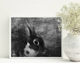 Baby animal prints Nursery art print Black and White arts Bunny Photo Kids room decor Nursery wall art Rabbit photography Unique printables