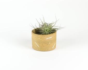Dash Planter