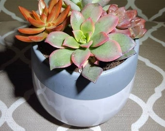 Succulent Planter, succulents, succulent arrangement in ceramic pot