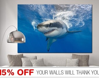 Great White Shark, White Shark canvas, Shark canvas, Sea Life canvas,Shark, White Shark art,  Shark Wall Art, Shark Print, Shark Wall Decor,