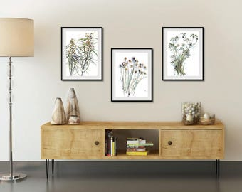 Set Of 3 Botanical Prints, Wattles Chives And Parsley Herbs Prints Posters, Living  Room