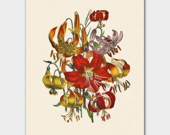 "Flower Print Art, Tiger Lily Bouquet (Orange Botanical Wall Art, Jane Loudon  Floral Artwork) ""Lilies"""