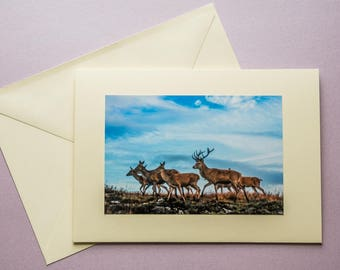 Red Deer - all occasion greeting card