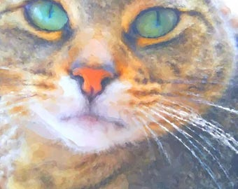 Rescue Cat Watercolor