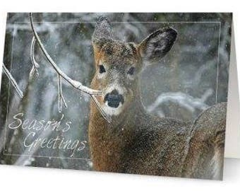White-tailed Deer Holiday Card - Set of 5