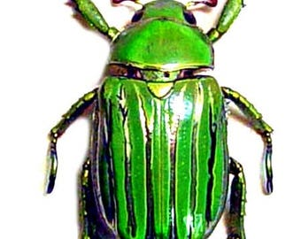 Supplies for your artworks - dried insects - :  5 beetles chrysina gloriosa  25mm  rutelinae UNMOUNTED A1 quality, FREE SHIPPING