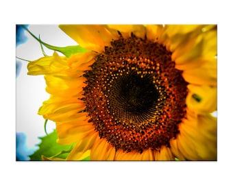 Summer Sunflower Photography Print