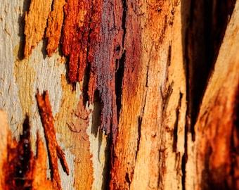 Abstract wall art, raw wood, wood print, tree photo, nature photography, macro print, micro print, minimalist art, print photo, modern print