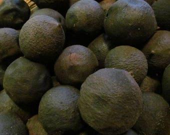 Black Walnut Hull Powder - Wild Harvested in the Appalachian Mountains!