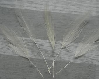 set of 5 Rooster feathers spinning cream