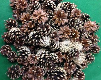 Jack Pine Cones, Pine Cones, Cones decorating, Wreath Cones, Wedding Decorating Cones