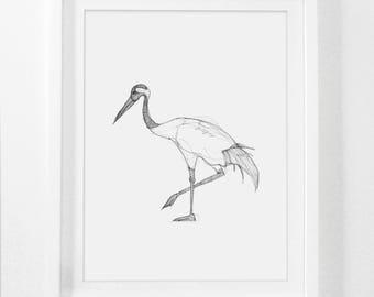 Bird Sketch, Bird Drawing, Pencil Drawing, Framed Sketch, Hand Drawn Art, Crane Print, Framed Wall Art, Pencil Sketch, Bird Prints, Framed